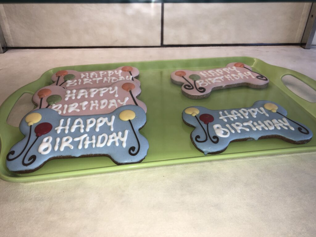 happy birthday dog cookies phoenix az cookies n clean