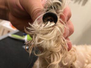 full curl dog nail in phoenix az