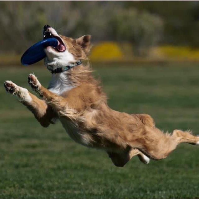 anthem az arizona pro frisbee toss & fetch