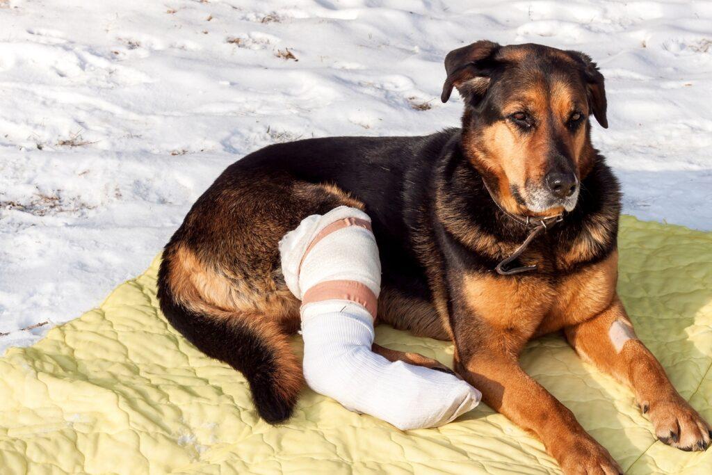 cbd for dog pain relief in phoenix az cookies n clean